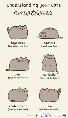Emotions Of A Cat!