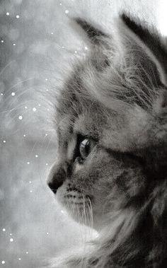 Nothing is cuter than a kitten