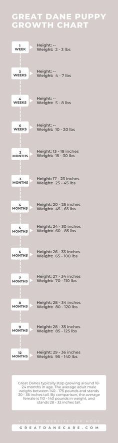 Wondering how much your Great Dane puppy should weight or how tall that they should be? If so, I've got you covered with this quick infographic and full article (linked) on this topic! Puppy Growth Chart, Tallest Dog, Dane Puppies, Great Dane Puppy, Gd, Infographic, Infographics, Largest Dog, Visual Schedules