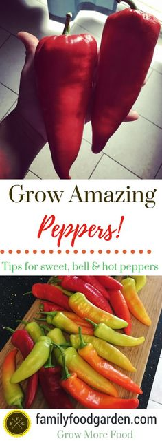 Tips for growing peppers! Grow bell peppers, sweet peppers & hot peppers Tips for growing peppers! Growing Bell Peppers, Coconut Oil Weight Loss, Bokashi, Pepper Plants, Organic Gardening Tips, Vegetable Gardening, Container Gardening, Veggie Gardens, Gardening Books