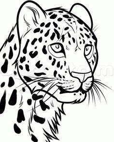 how to draw a leopard head step 6