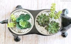 Learning, Creating, Living.: Faux Succulent Dachshund Planter