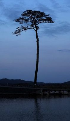 Japan Earthquake, One Year Later.  A single pine tree is left standing after last year's tsunami, which swept away an entire forest in the city of Rikuzentakata. People see the tree's miraculous survival as a symbol of hope and want to preserve it as a living monument.