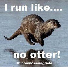 run. like no otter!