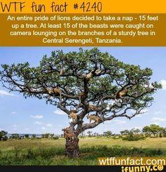 Wtf fun fact #4240
