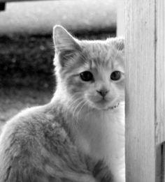 eharmony cats