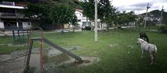 Sao Paulo Brazil (on remarque que le cheval est un motif choisi par les 3 google street photographes présents sur cette page)