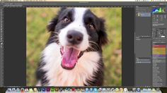Free Pet Photography Tutorial - Removing colour casts in Photoshop CS6