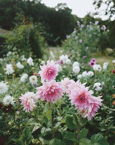 An English Cottage Garden with Brigitte Girling of Moss & Stone Floral Design Veg Garden, Vegetable Garden Design, Garden Cottage, All Flowers, Beautiful Flowers, Lush Lawn, British Garden, Edible Plants, Flower Farm