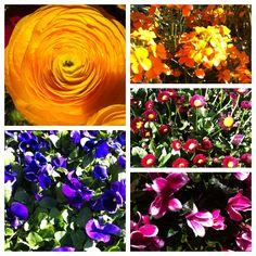 spring flower inspiration board