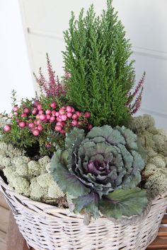 38 Inexpensive Winter Planter Ideas For Home To Try Asap Container Flowers, Container Plants, Container Gardening, Winter Planter, Fall Planters, Garden Basket, Garden Pots, Decoration Plante, Balcony Plants