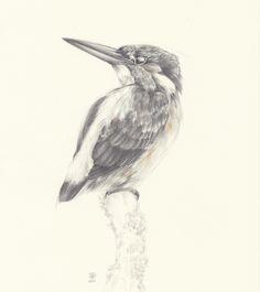 study-azur-kingfisher-895x1280