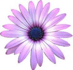 106 Best clip art - Flowers images   Clip art, Flower art ...