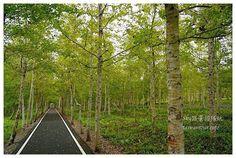 台灣第一座平地森林公園,清幽又安全的自行車道,還有超大的草原,超適合親子旅遊和毛小孩,更有花蓮伯朗大道之稱! 花蓮景點推薦-超大森林觀星去【大農大富平地森林】
