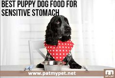 Best Puppy Dog Food For Sensitive Stomach | Pat My Pet