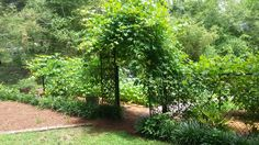Hydrangea Festival - Garden Tours