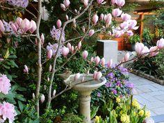 Spring Prelude Garden.