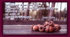 Centro Yoga a Roma Paulo Coelho, Frases