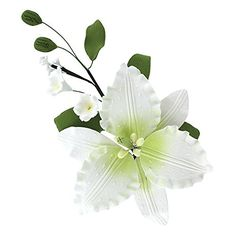 Casablanca Lily Spray, White with Green, 8 Count by Chef Alan Tetreault * Check out this great image @ - Baking tools