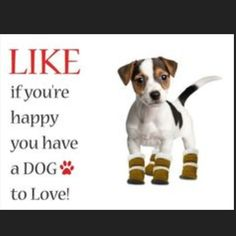 Enough Said!!! Like for cats too! Like for all PAWS!!!! #furrypawlife www.furrypawpics.com #love #dogsofinstagram #instapets #instart #petart #art