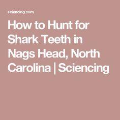 How to Hunt for Shark Teeth in Nags Head, North Carolina   Sciencing