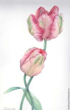 Together. Parrot Tulips. Traditional art ( watercolor). Prof. paper: Canson 300 g/м2 (cotton). Svetlana Markina (LechuzaS) Size: 20cm*35cm