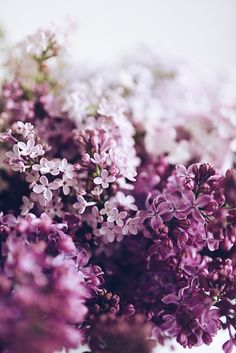 Victoria Palvin — floralls: Lilac by Dominika Brudny Lilac Flowers, Flowers Nature, Spring Flowers, Beautiful Flowers, Lavender Aesthetic, Flower Aesthetic, Purple Aesthetic, Spring Aesthetic, Sunset Pictures