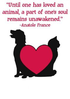 No one can understand the profound love you had for your pet until their soul is awakened by the same love.