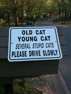 should be written on our street too - there are not much traffic, so the cats lie on the Asphalt or run criss-cross all the time