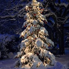 - - - - - - #Christmas #red #green #gold #silver #jinglebells #tistheseason #tree #lights #hotchocolate #candycanes #mistletoe #snow #ice #fireplace #warm #love #snowman #santa #presents #Rudolf #gingerbread #wreath #cookies #candle #winter #ornaments #joytotheworld #F4F #tagforlikes #christmas #christmasgift #instafollow