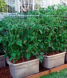 Gardening Without a Yard Luke Iseman