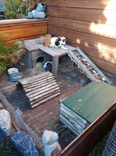 Diy Guinea Pig Cage, Guinea Pig Hutch, Guinea Pig House, Bunny Hutch, Pet Guinea Pigs, Animal Room, Animal House, Diy Bunny Toys, Rabbit Shed