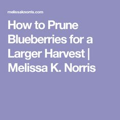 How to Prune Blueberries for a Larger Harvest | Melissa K. Norris