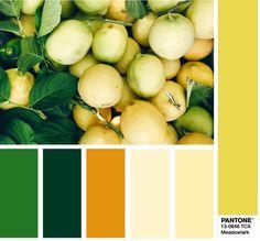 PANTONE 13-0646 Meadowlark - Иволга