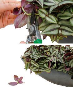 Garden Plants, Indoor Plants, Green Furniture, Amazing Gardens, Houseplants, Cherry Blossom, Terrarium, Flora, Succulents