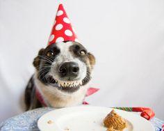 happy - birthday - smiling - dog