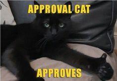 New cat meme!