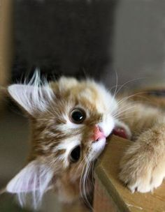 It's kitten season!