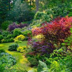 amazing backyard blend of color and landscape plantings