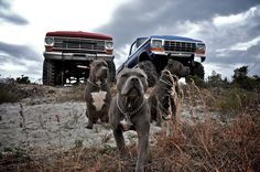 Has my two favorite things in the world! Lifted Trucks and Pitbulls! Big Dogs, Dogs And Puppies, Doggies, Bully Dog, Dog Wallpaper, Pit Bull Love, Family Dogs, Pit Bulls, Pitbull Terrier