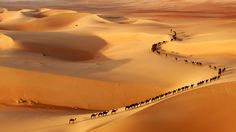 Camel train by Josh Owens, via 500px