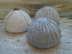 Medium urchin R100