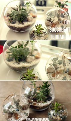 cómo hacer un terrario, terrario hazlo tu misma, terrarium diy, como cuidar suculentas, how to take care of succulents, , cactus, terrarium, how to make a succulent terrarium, diy terrarium, como hacer un terrario de suculentas, terrario de cactus, terrario de suculentas, pecera con matas, jardineria cali, indoor gardening, home decor, cacti terrarium, alina a la mode, alina a la moda, fashion blog, fashionblogger, style blog, lifestyle blog, do it yourself, cali, colombia
