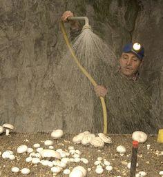 La Cave Vivante du Champignon au Puy-Notre-Dame (49) - visite, horaires d'ouverture et tarifs