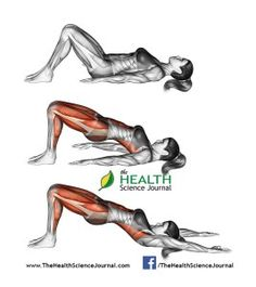 All About Abs – 66 Exercises in Pictures! Bodybuilding, Calisthenics Yoga…