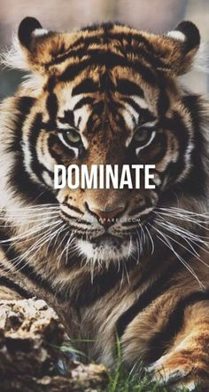 70 Motivational Quotes About Life And Happiness sayings 70 Motivational Quotes About Life And Happiness Sayings 37 Tiger Quotes, Lion Quotes, Me Quotes, Qoutes, Envy Quotes, Bossy Quotes, Smart Quotes, Attitude Quotes, Famous Quotes