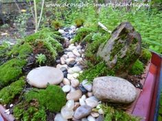 magical gardens drought | The moss garden in miniature will only get better with time; the moss ...