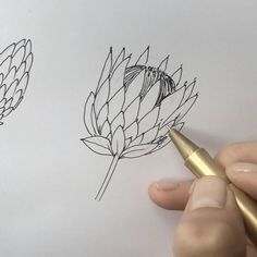 want to learn how to draw a pretty? Watch this video of a protea drawn with black ink – Nicnillas Ink Protea Flower, Flowers, Doodles Zentangles, Learn To Draw, Line Drawing, Doodle Art, Creativity, Channel, Paintings