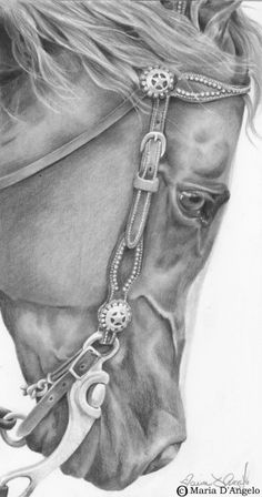 Silver Stars - graphite by Maria D'Angelo. Equis Art Gallery