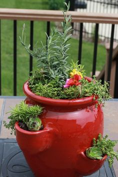 Succulents and perennials in a strawberry pot.  A great planting idea for that container you don't know what to do with.